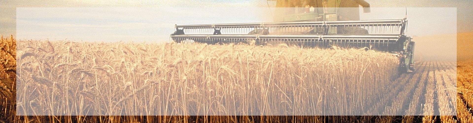 قیمت خرید محصولات کشاورزی اعلام شد