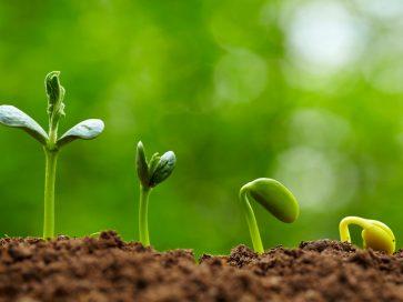 بذر مال