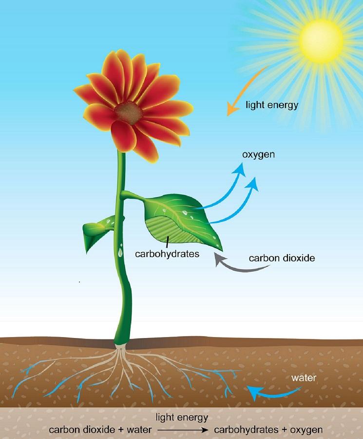 دانش کشاورز: فرآیند جذب و نقش عناصر معدنی در گیاه