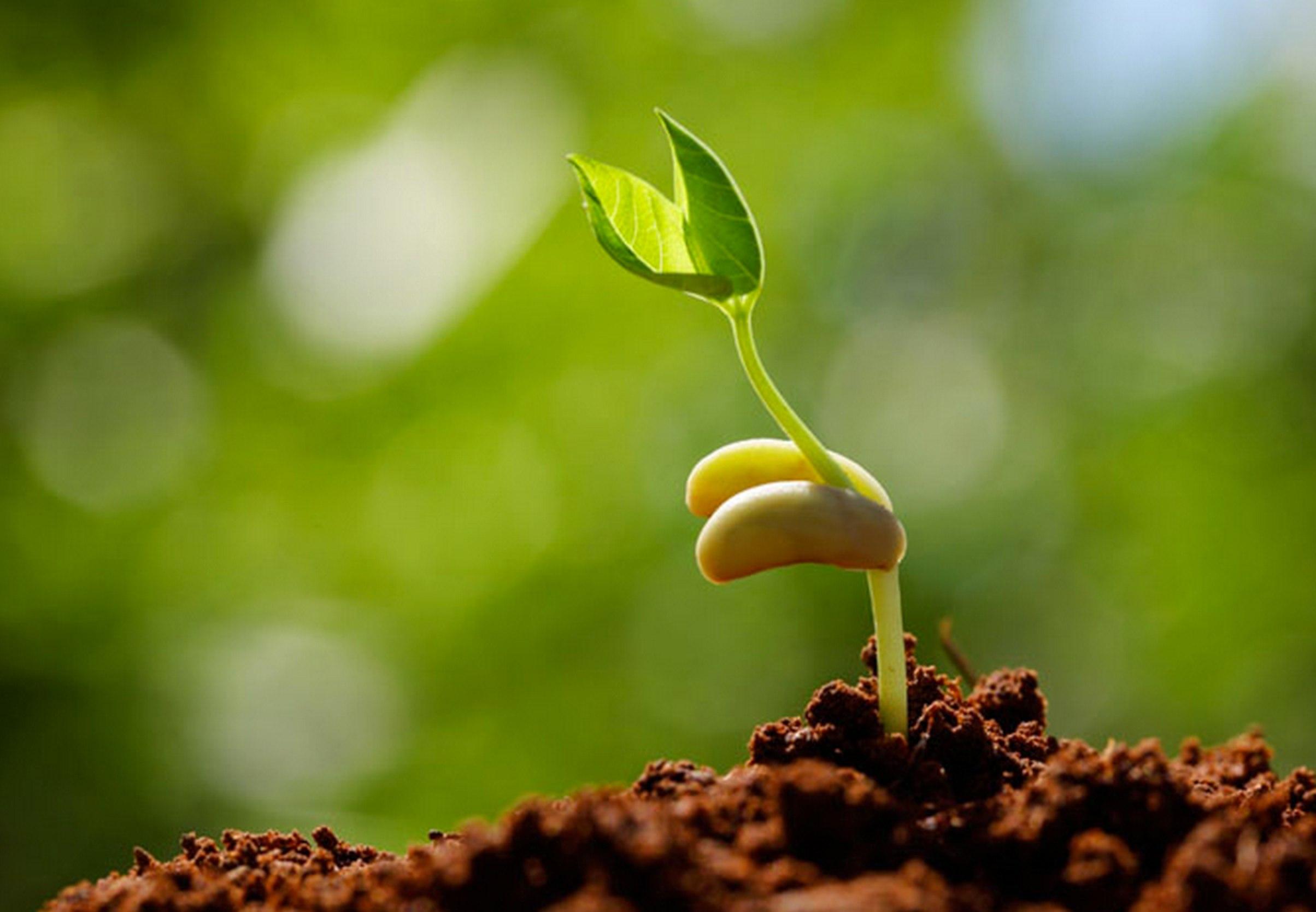 توسعه همکاری ایران با  آلمان و اسپانیا در تولید بذر