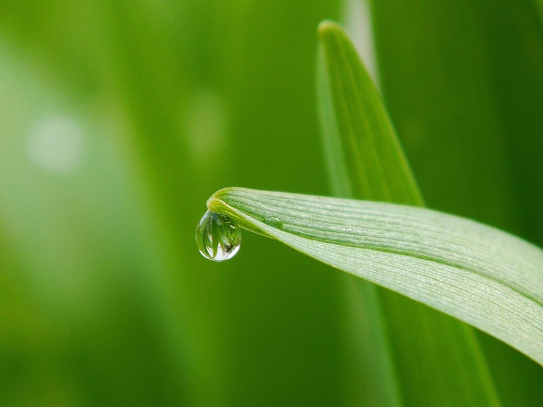 دانش کشاورز : اسیدهای آمینه چه نقشی در گیاه دارند ؟