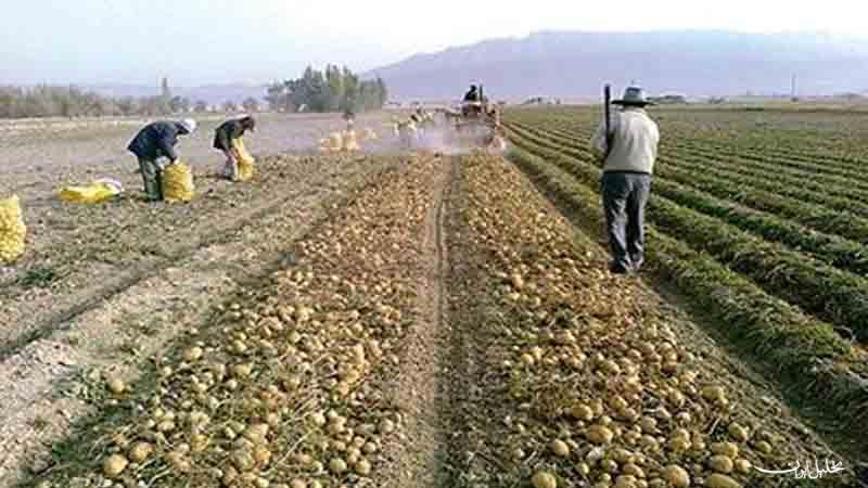 بررسی دستمزد کارگران بخش کشاورزی