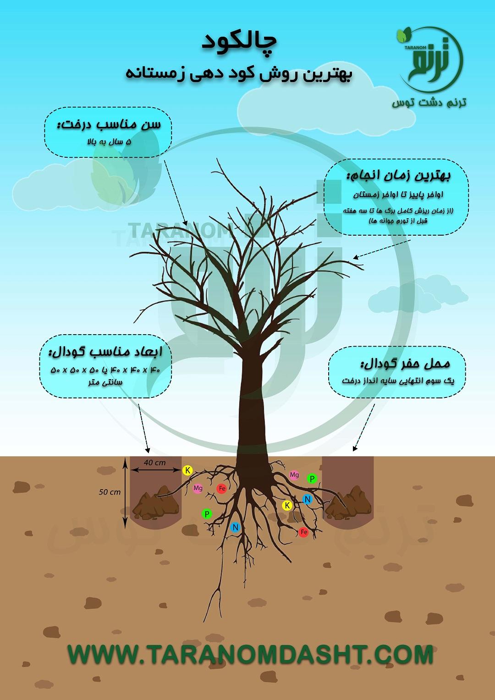 دانش کشاورز : روش صحیح چالکود