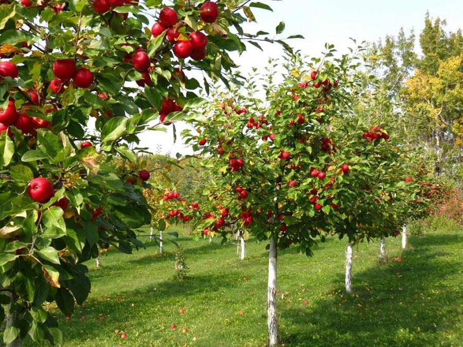 راهنمای باغ سیب : قبل از بیدار شدن درخت