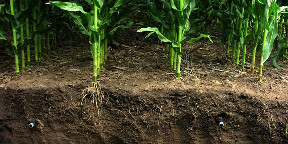 دانش کشاورز : آبیاری قطره ای زیر سطحی