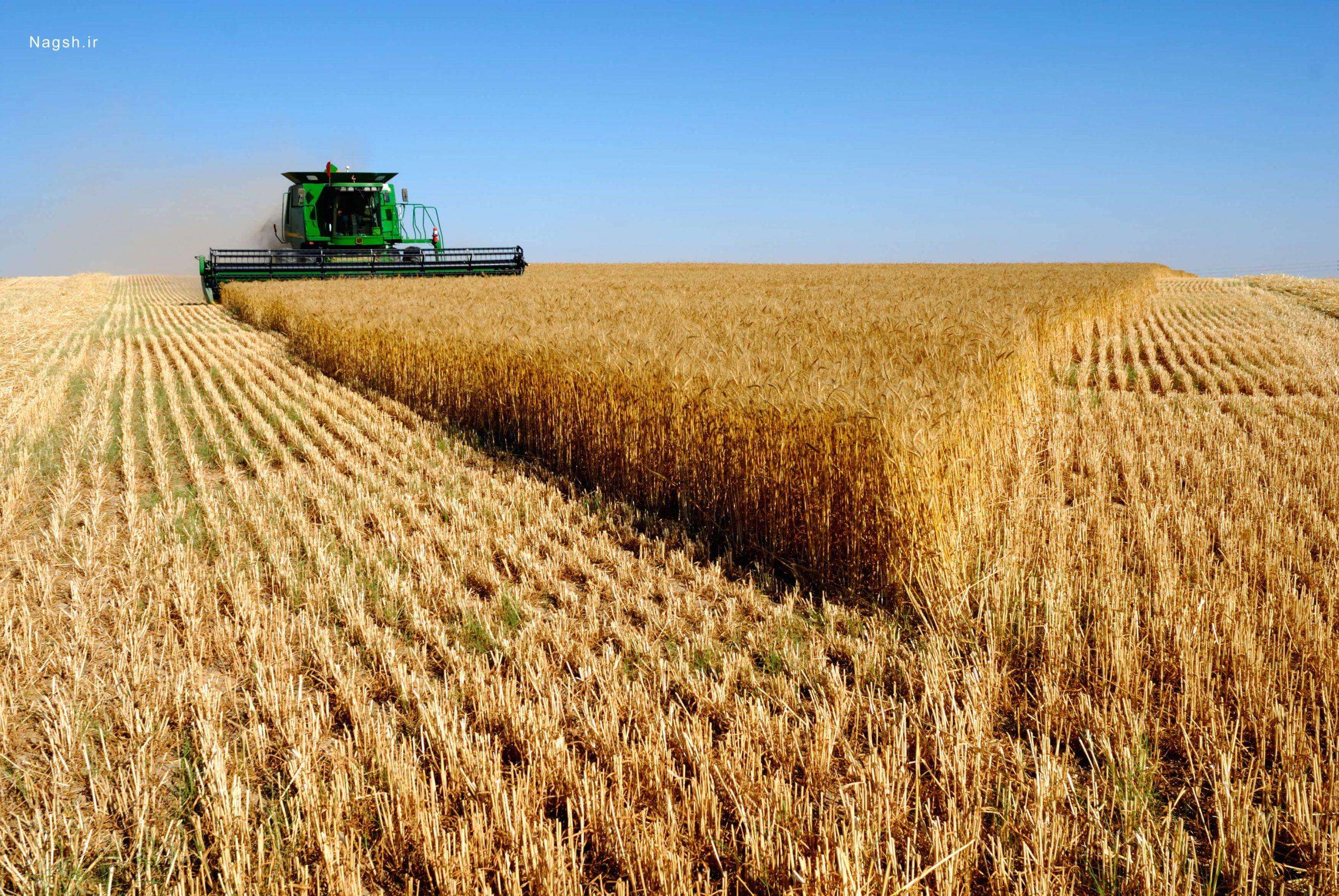 همکاری جهاد کشاورزی و حفظ نباتات برای مقابله با آفات و بیماری های گندم