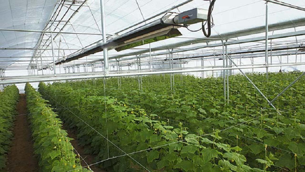 افزایش راندمان محصولات کشاورزی با توسعه گلخانهها